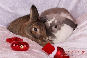 Milo + Molly Weihnachten
